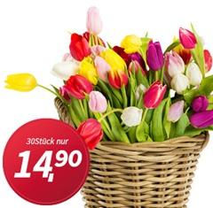 Produktbild Tulpen Mailing (2)