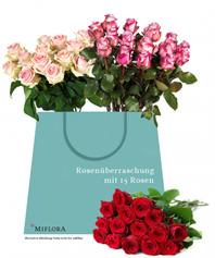 image 15 Rosen für 13,40€ inklusive Versand