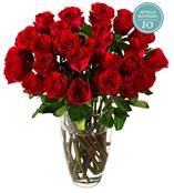 Bild zu Miflora Rosen Rallye – bis zu 25 Hot Blood Rosen für 20,80€ inklusive Versand