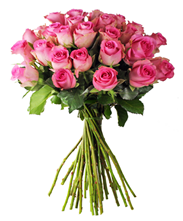 Bild zu BlumeIdeal: 30 rosafarbene Rosen (50cm lang) für 20,85€