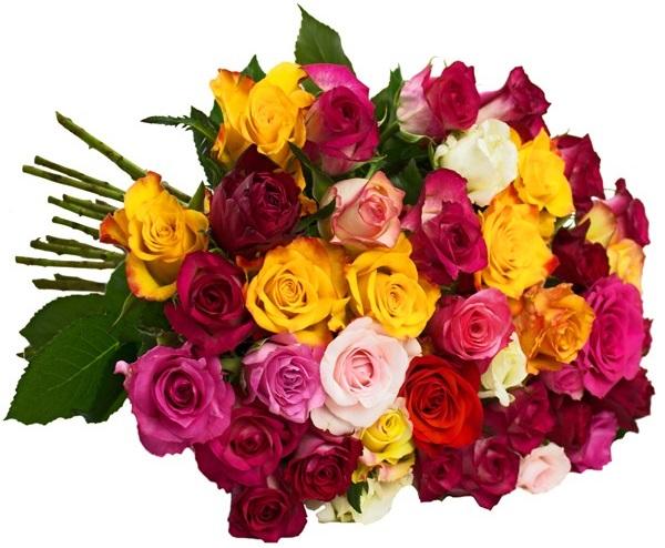 Bild zu BlumeIdeal: 40 bunte Rosen (50cm lang) für 22,85€ inkl. Versand