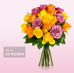 Bild zu Miflora: Rosen Rallye – bis zu 26 bunte Rosen für 18,90€
