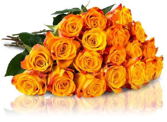 Bild zu Miflora: 25 Marie-Claire Rosen (50cm Stiellänge) für 20,90€