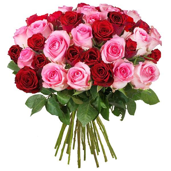 Bild zu BlumeIdeal: 30 rote Rosen (50cm lang) für 19,94€