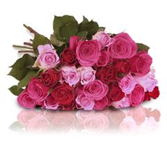 Bild zu Rosenstrauß bestehend aus 26 Rosen (rosa, rote & pinke Rosen) für 18,90€