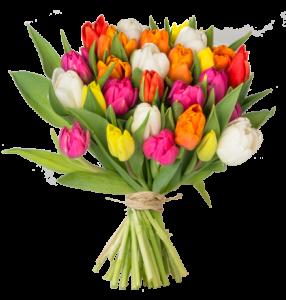 tulpen-1-neu_1