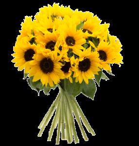 sonnenblumen-2_1
