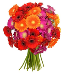 Bild zu BlumeIdeal: 45 bunte Gerbera in einem Blumenstrauß für 22,94€