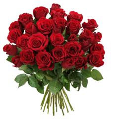 Bild zu BlumeIdeal: 47 rote Rosen (50cm Stiellänge) für 26,94€