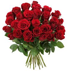 rosen-rot22_1_1_1
