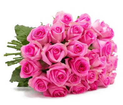 """Bild zu Blume Ideal: Blumenstrauß """"PinkDiamonds"""" mit 44 pinken Rosen (50cm Stiellänge) für 24,98€"""