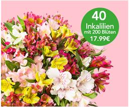 Bild zu Blume Ideal: Blumenstrauß mit 40 Inkalilien (Alstroemeria) für 22,98€