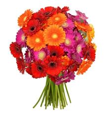 Bild zu Blume Ideal: Blumenstrauß mit 44 bunten Gerberas (50cm Stiellänge) für 22,98€