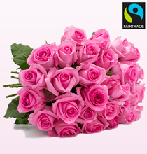 """Bild zu BlumeIdeal: 33 Rosen """"PinkDiamonds"""" für 19,98€ inkl. Versand"""