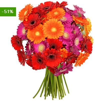 Bild zu BlumeIdeal: 33 Gerbera für 20,98€ inkl. Versand