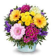Bild zu Lidl Blumen: 20% Rabatt auf alles