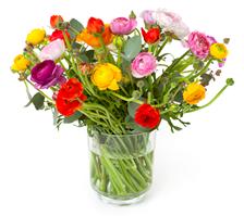 Bild zu Blume Ideal: Blumenstrauß mit 33 bunten, italienischen Ranunkeln für 22,94€