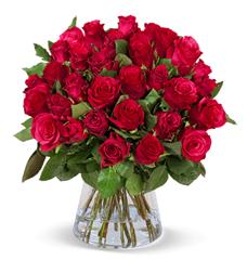 Bild zu Blume Ideal: Blumenstrauß mit 35 roten Rosen (50cm Stiellänge) für 25,98€