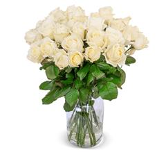 Bild zu Blume Ideal: Blumenstrauß mit 24 weißen Premium Rosen (XXL Blütenkopf) für 24,98€
