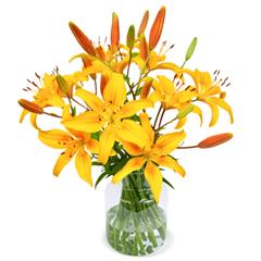 Bild zu Blume Ideal: Blumenstrauß mit 20 gelben Lilien mit XXL Blüten für 24,98€
