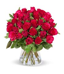 40 rote Rosen ClassicRed online bestellen - BlumeIdeal de